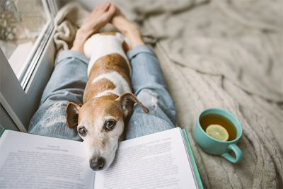Astrology and your Dog